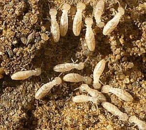 Termite Inspections Raleigh